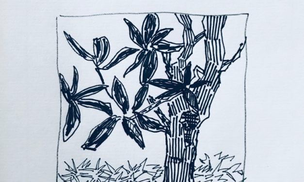 素描画 | Tree